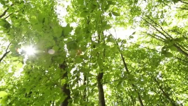 Panorama forest. Trees with beautiful green leaves.