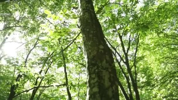 Panorama les. Stromy s krásné zelené listy.