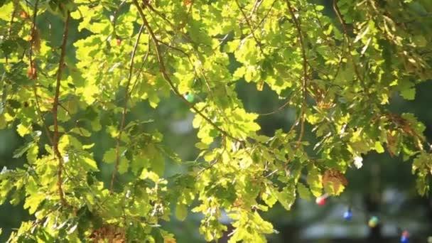 Panoramawald. Bäume mit schönen grünen Blättern.