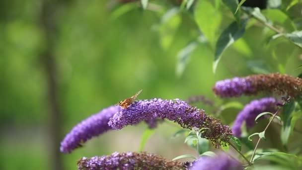 Repülő pillangó a virágok virágzó