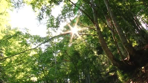 Landschaft des schönen Baumes im Wald