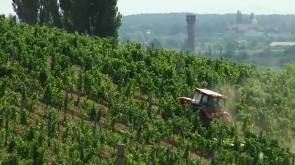 Traktor jede kolem pole s hrozny