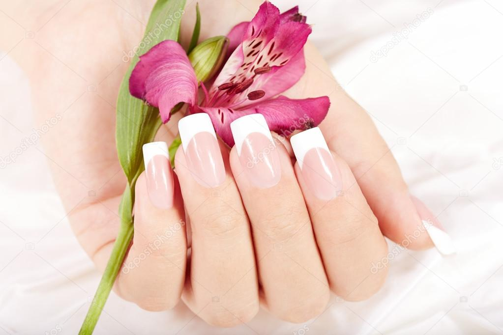 Hand with long artificial french manicured nails and lily flower ...