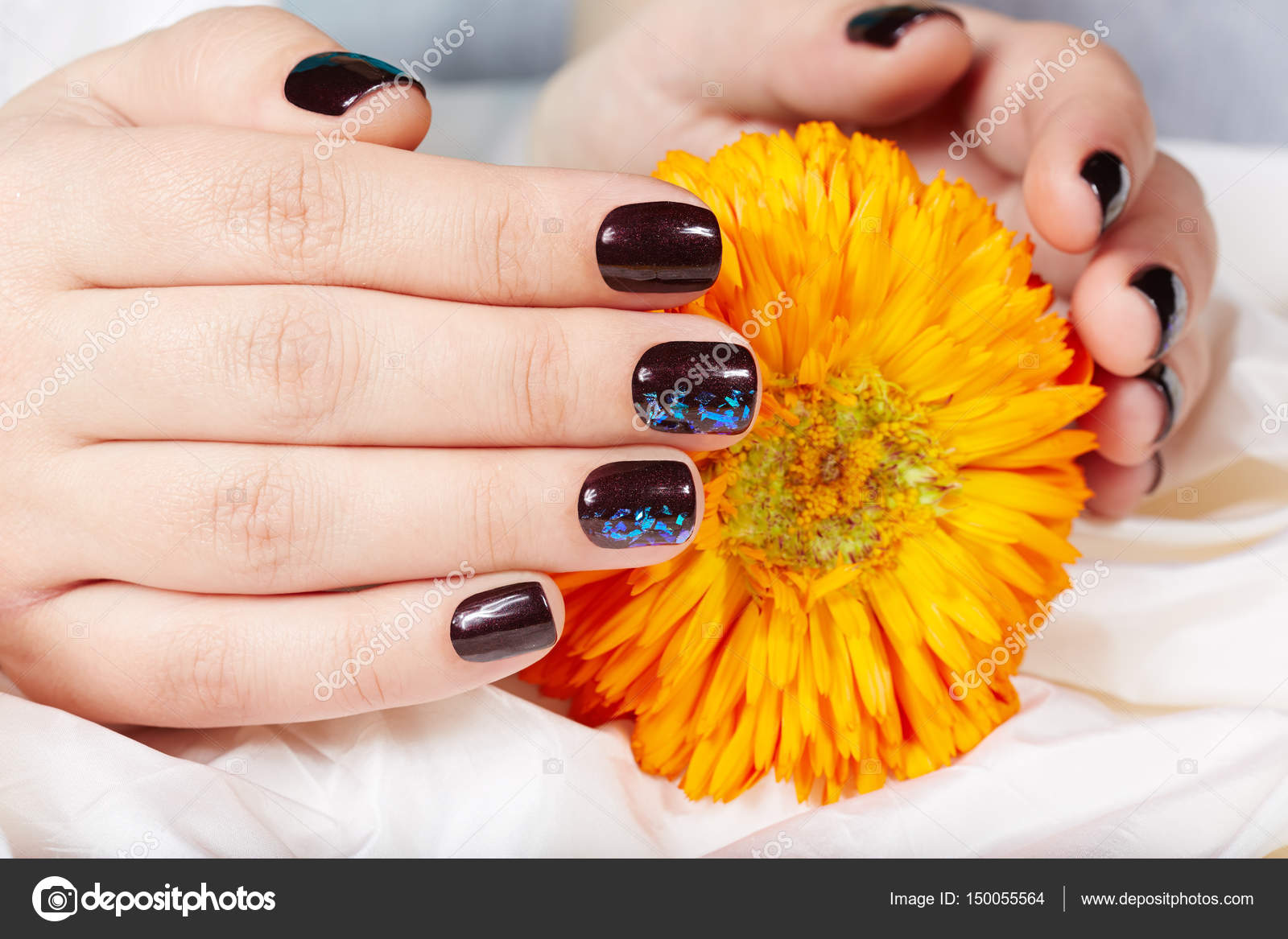 Hands with short manicured nails colored with dark purple nail ...