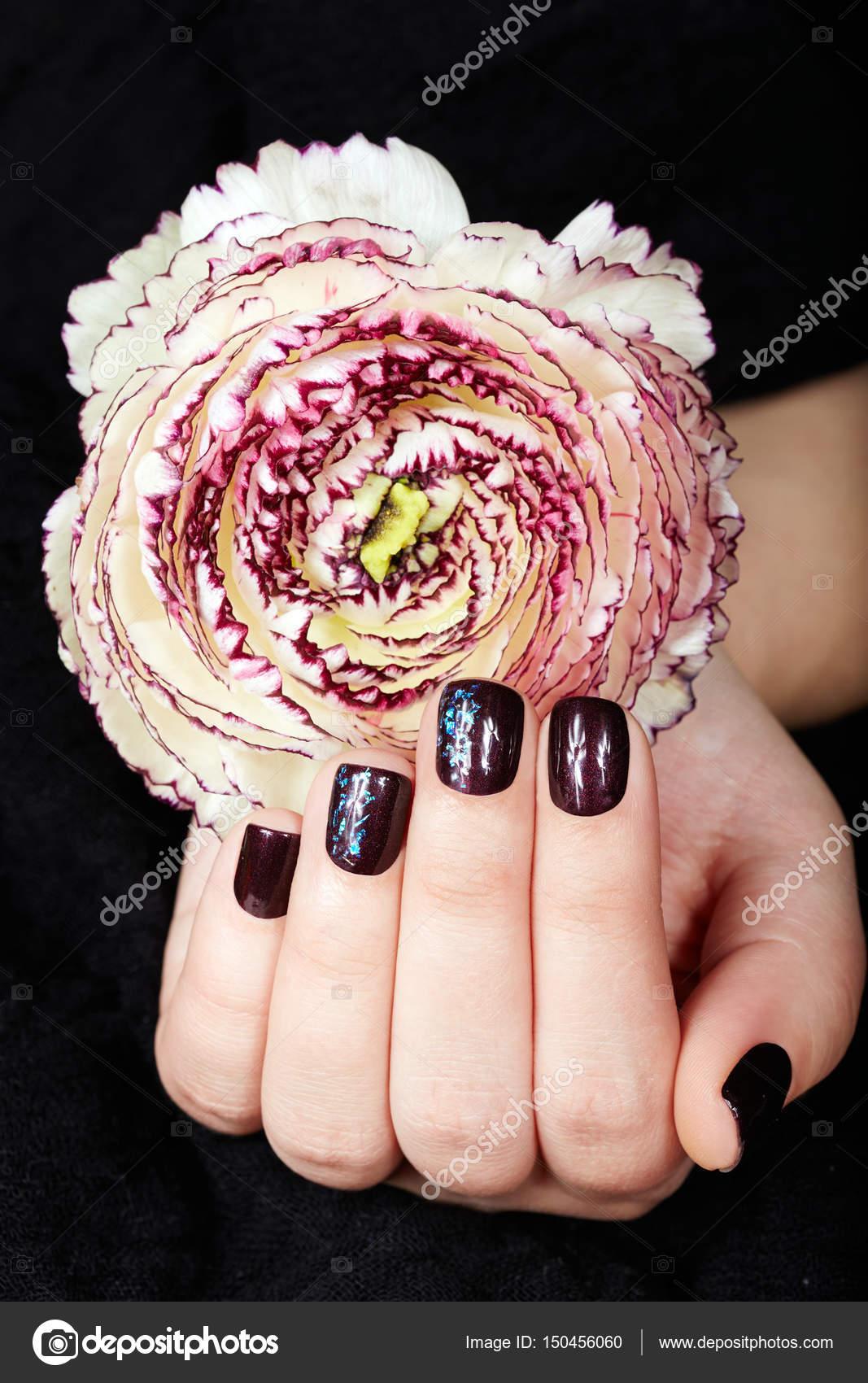 Hand mit kurzen gepflegten Nägeln gefärbt mit dunklen lila Nagellack ...