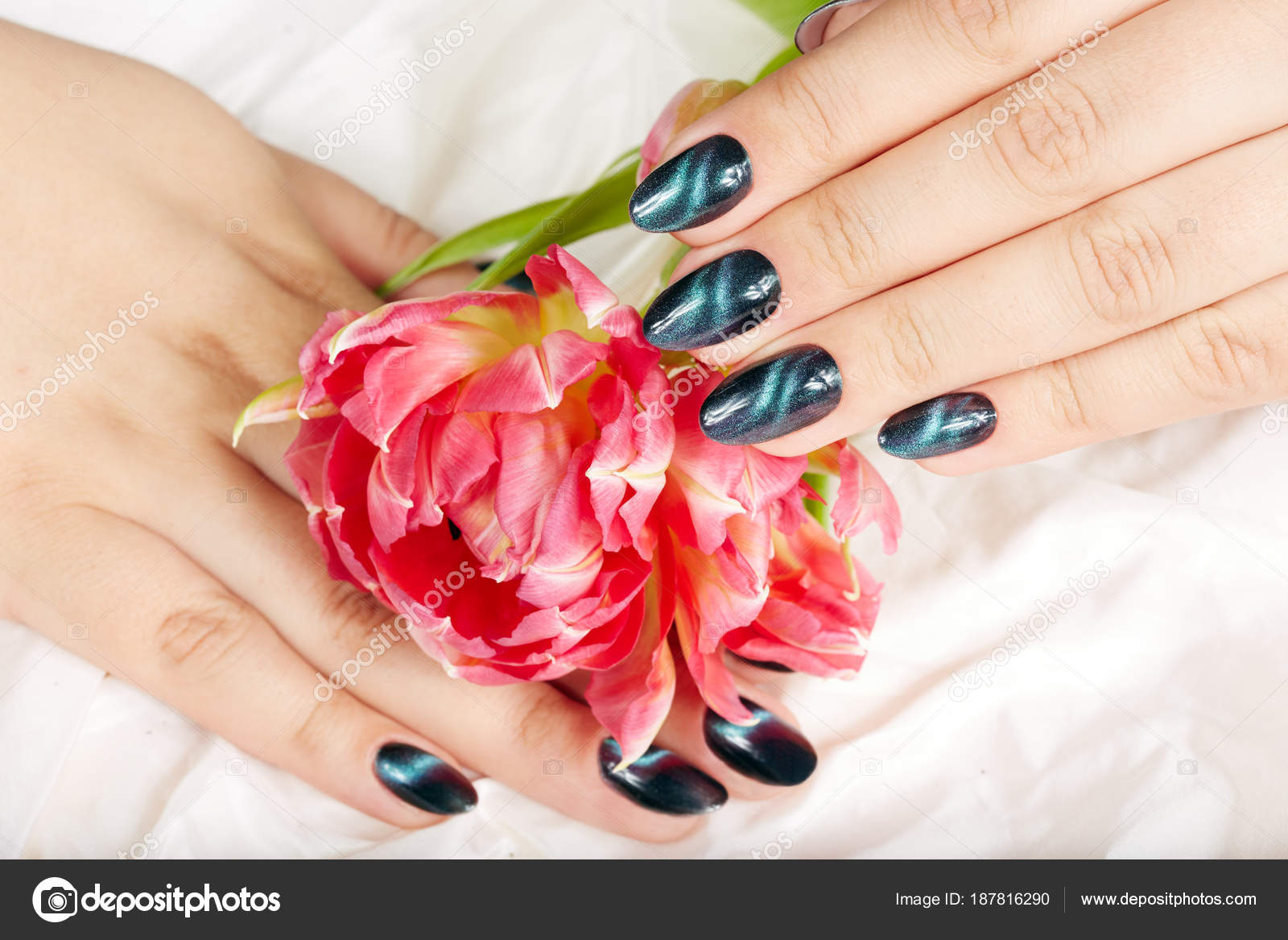Hands Manicured Nails Cat Eye Design Holding Bouquet Flowers — Stock ...