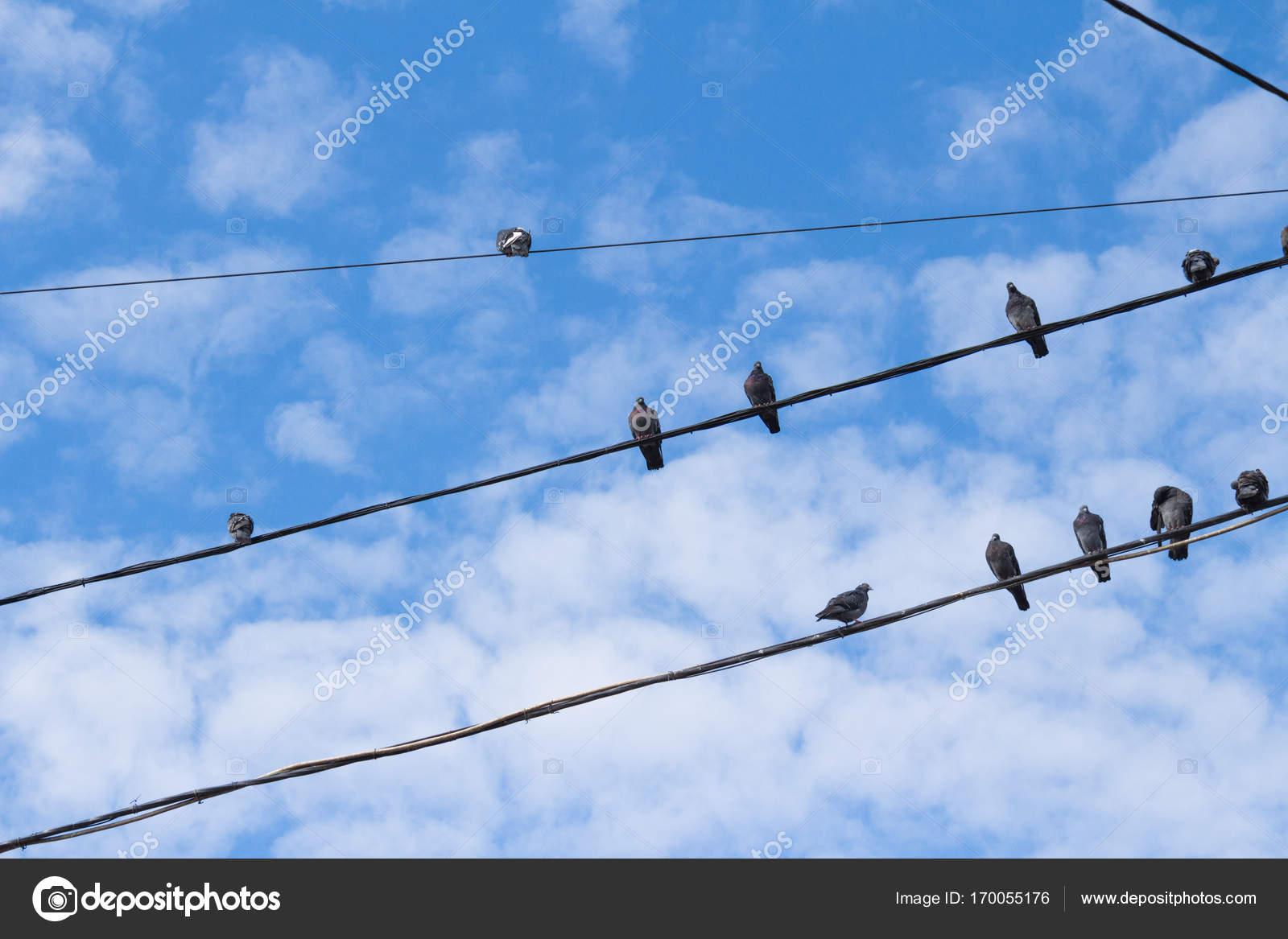 viele Tauben auf eine elektrische Drähte — Stockfoto © Smartape ...