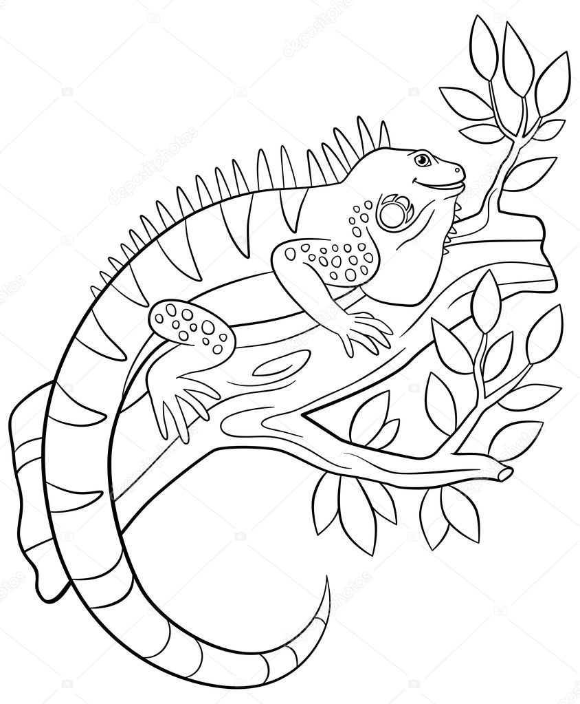 Coloring Pages Cute Iguana Sits On The Tree Branch Stock Vector