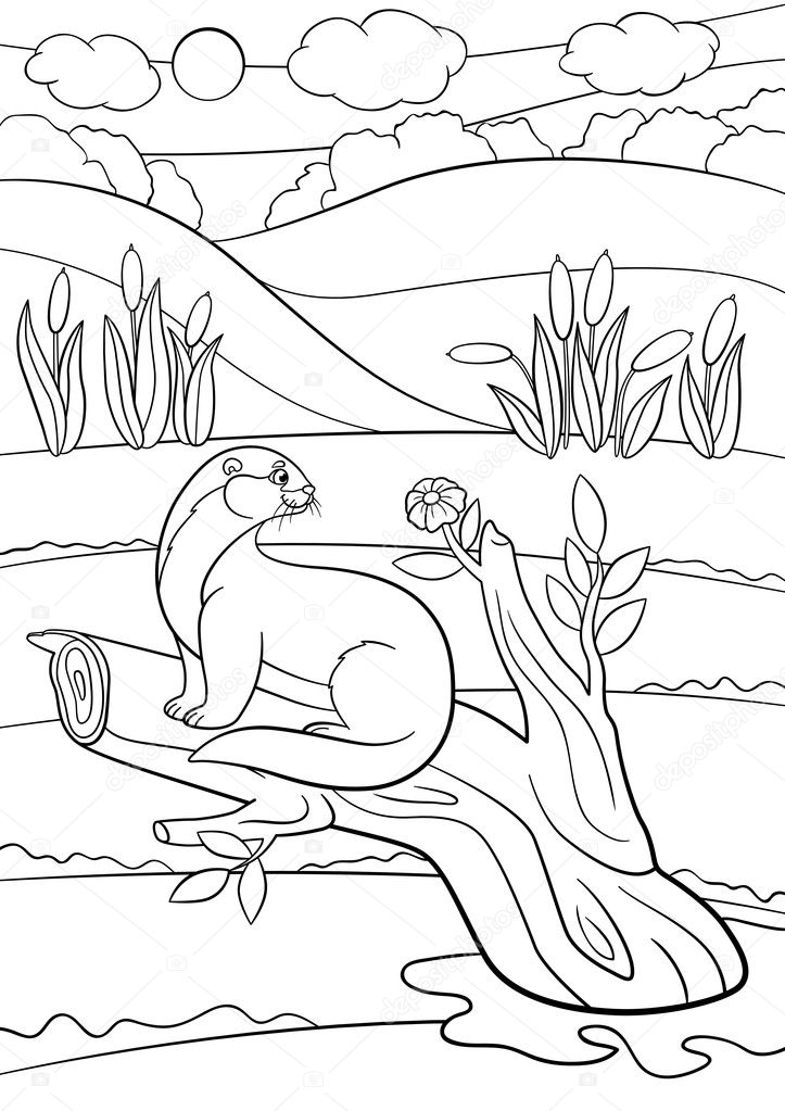 Dibujos para colorear. Poco lindo nutria se encuentra en la rama de ...