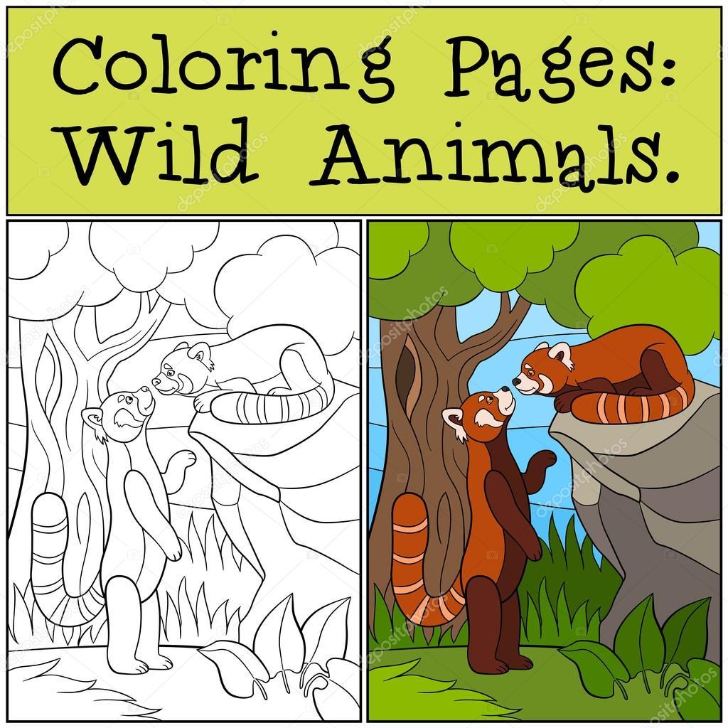 Malvorlagen: Wilde Tiere. Zwei kleine süße rote pandas — Stockvektor ...
