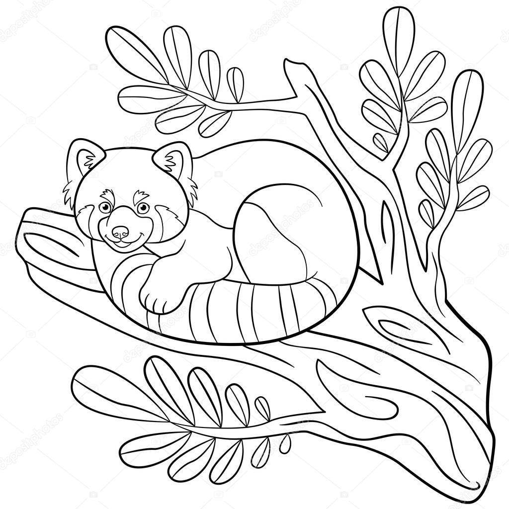 Boyama Sayfaları Ağaç Dalı üzerinde Küçük şirin Kırmızı Panda