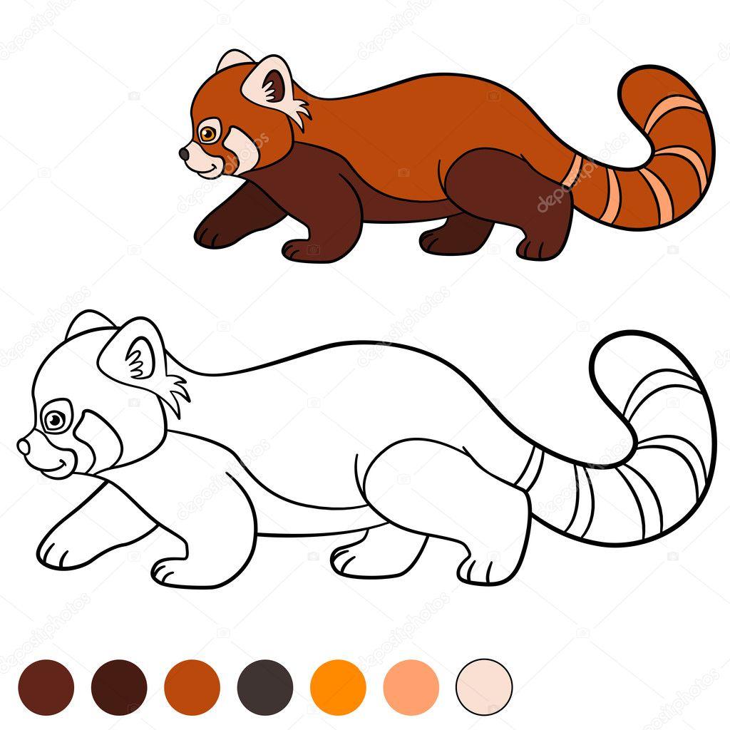 kleurplaat rode panda kleine schattige rode panda
