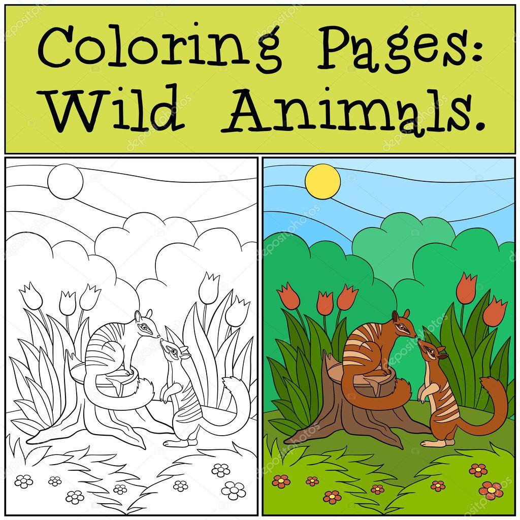 Malvorlagen: Wilde Tiere. Zwei kleine süße numbats — Stockvektor ...