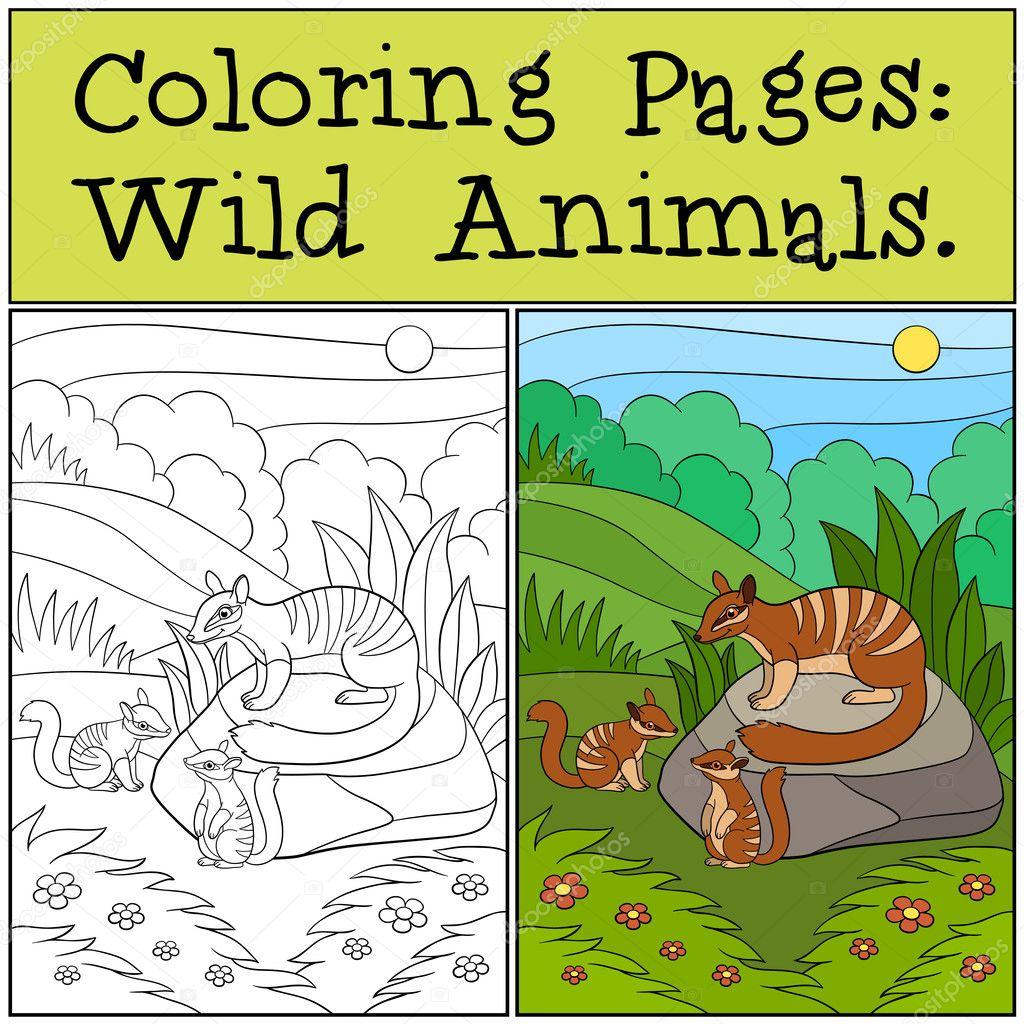 Dibujos para colorear: Animales salvajes. Numbat madre con su bebé ...