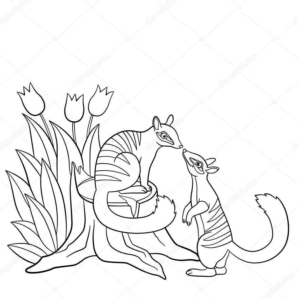 Malvorlagen. Zwei kleine süße Numbats schauen einander — Stockvektor ...