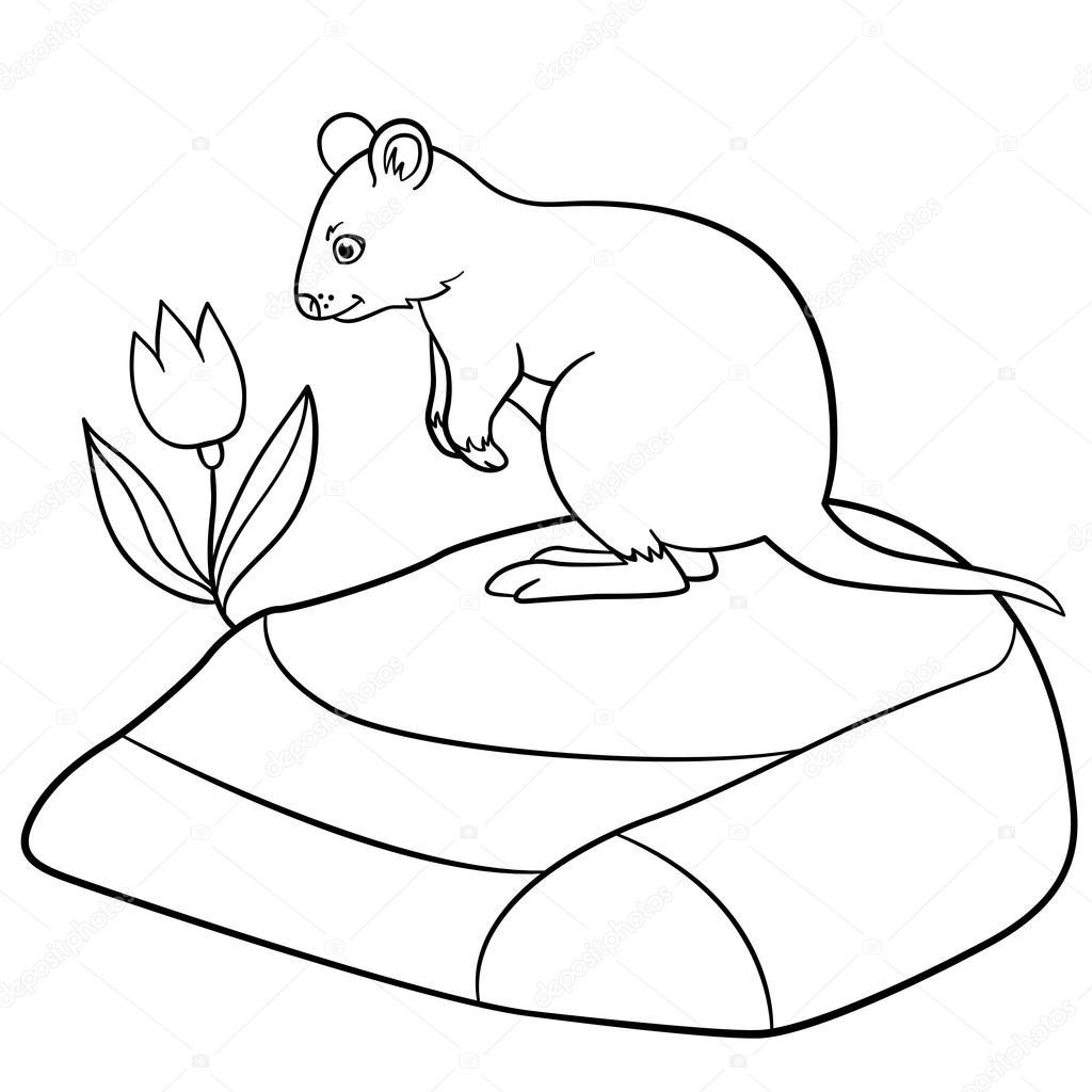Dibujos para colorear. Quokka lindo pequeño está parado en la piedra ...
