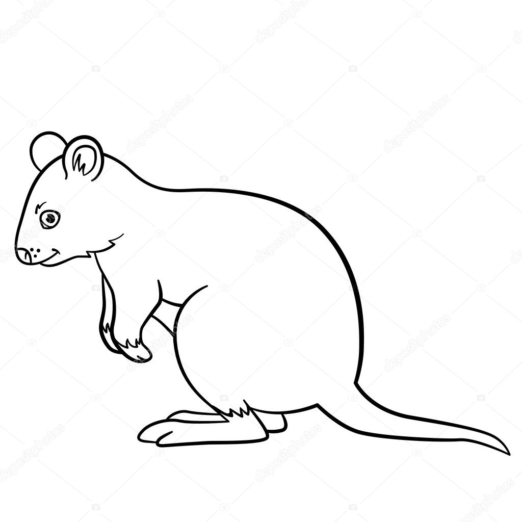 Coloring Pages. Little Cute Quokka Stands And Smiles. U2014 Vector By Ya Mayka