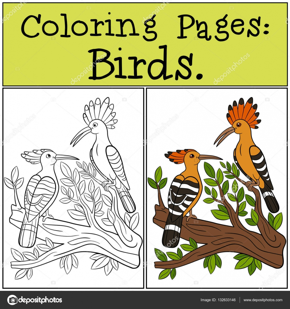 Coloring Pages Birds Two Cute Beautiful Hoopoes Vector Image By C Ya Mayka Vector Stock 132633146