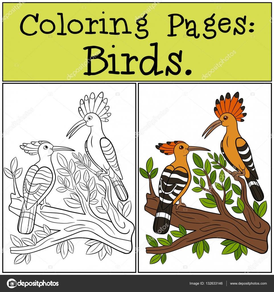 Malvorlagen: Vögel. Zwei süße schöne Wiedehopf — Stockvektor © ya ...