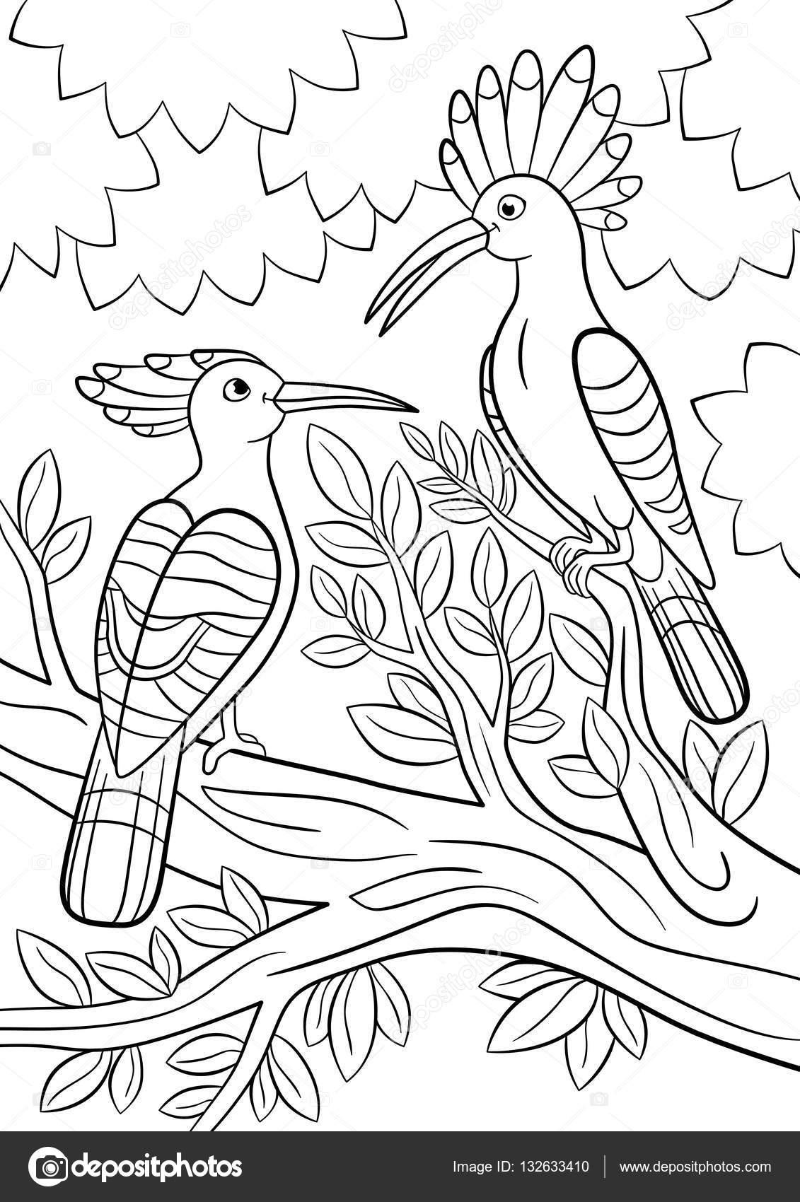 Dibujos para colorear. Dos abubillas hermoso sentarse en la rama de ...