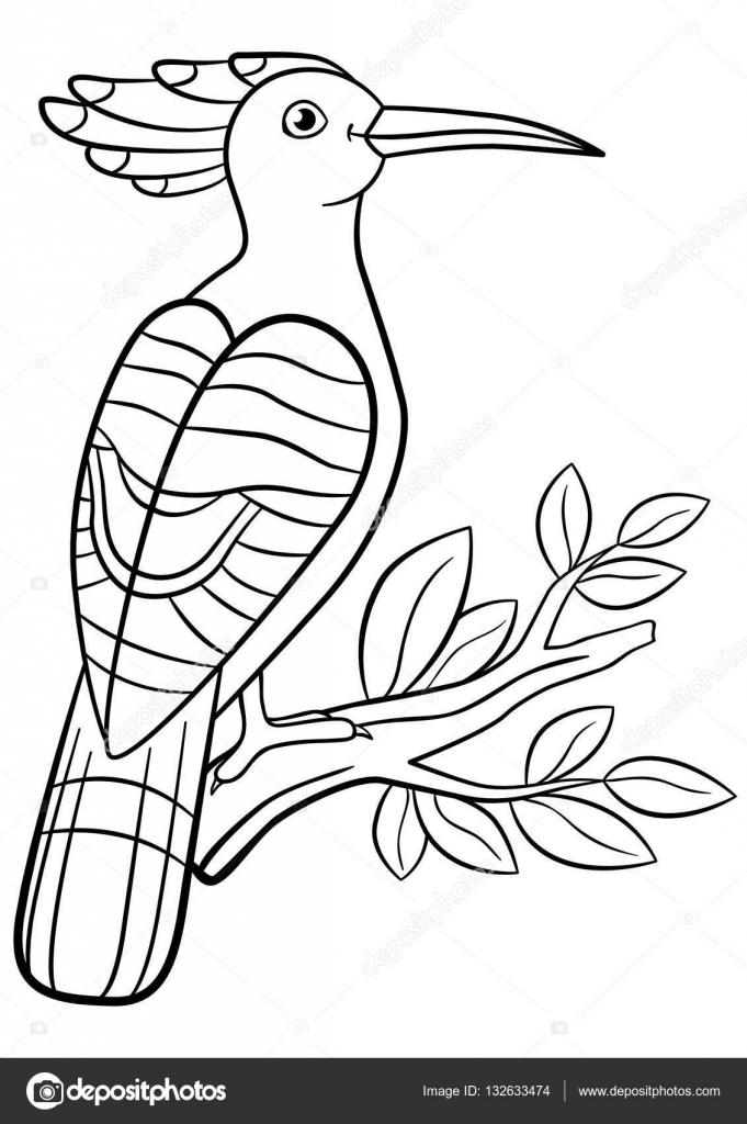 Dibujos para colorear. Linda hermosa abubilla se sienta en la rama ...