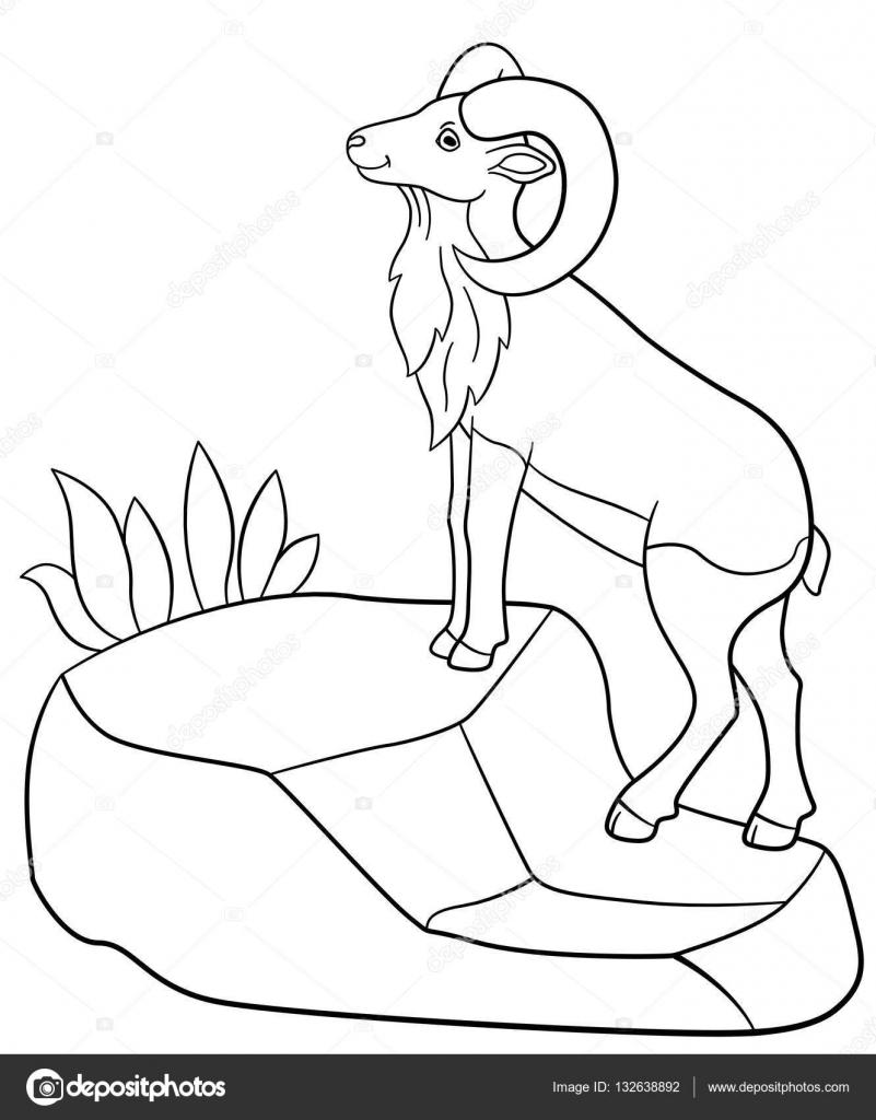 Dibujos para colorear. Lindo bonito urial está parado sobre la roca ...