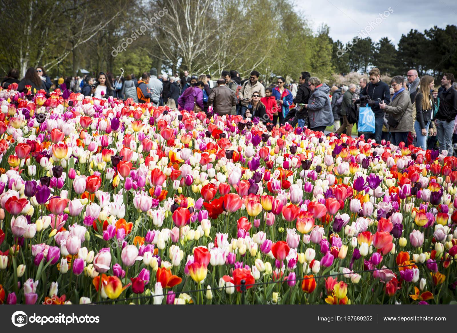Bloem En Tuin : De keukenhof de bloementuin in nederland u2013 redactionele stockfoto