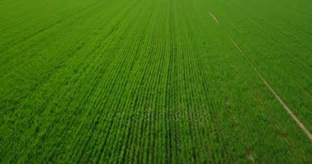 Příroda a krajina: letecký pohled na pole a stromy, pěstování, zelená tráva, venkov, zemědělství, polní cestu