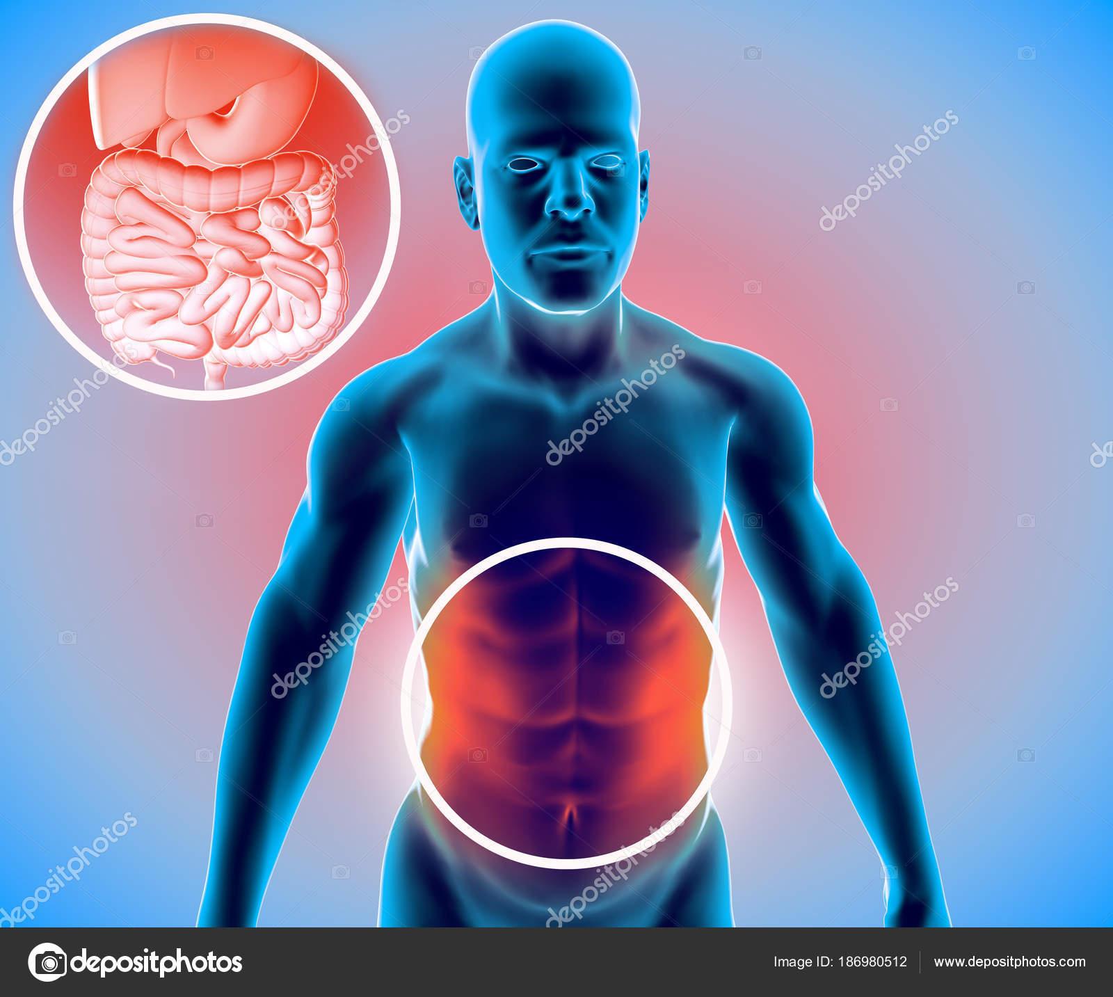 Cuerpo Humano Hombre Sistema Digestivo Anatomía Intestino Ampliación ...