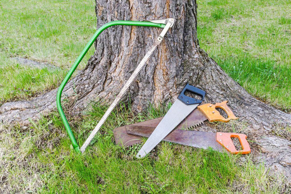 Carpentry tools near tree