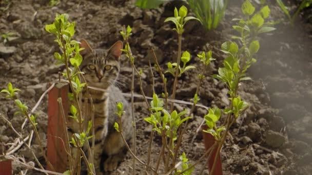 Macska sütkérezik a napon egy vidéki ház kertjében