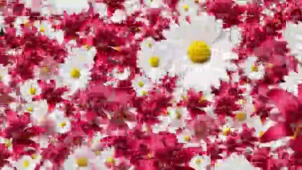 flowers decoration background animation