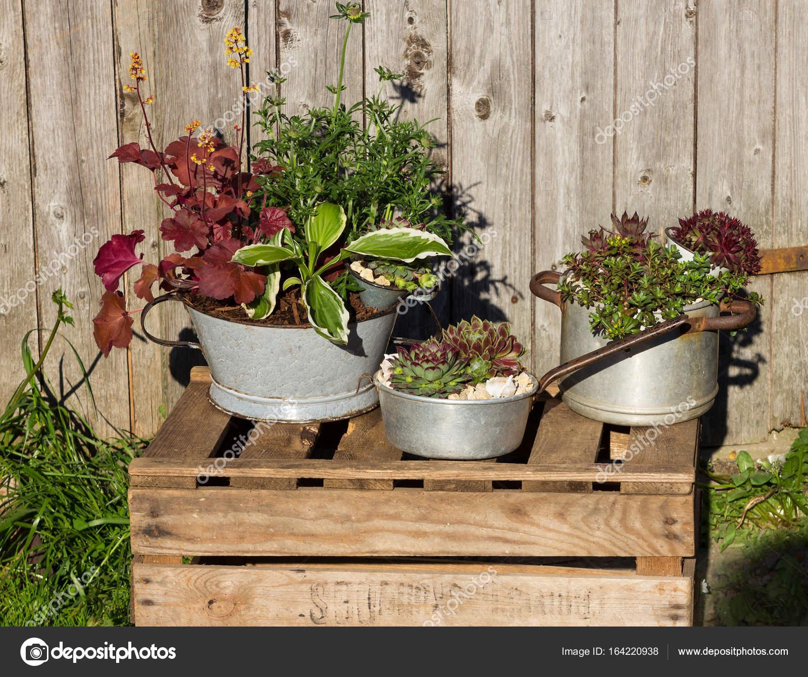 Diverse piante perenni, plantet in utensili da cucina dell\'annata ...