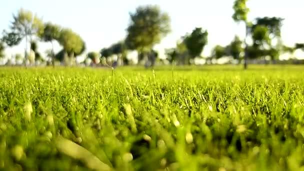 Zelený trávník pole