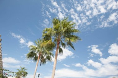 palmtrees with blue sky and clouds