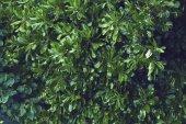 Fogli di verde con goccia dellacqua su priorità bassa nera