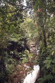 Clear waterfall in green forest, beautiful nature landscape