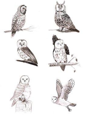 Set of owls, six cute owls