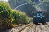 Fotografie Maisernte, Mais Feldhäcksler in Aktion, Ernte-LKW mit Traktor