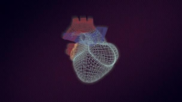 3D model lidského srdce na monitoru se otáčí, s vizuálními konstrukcemi a bití.