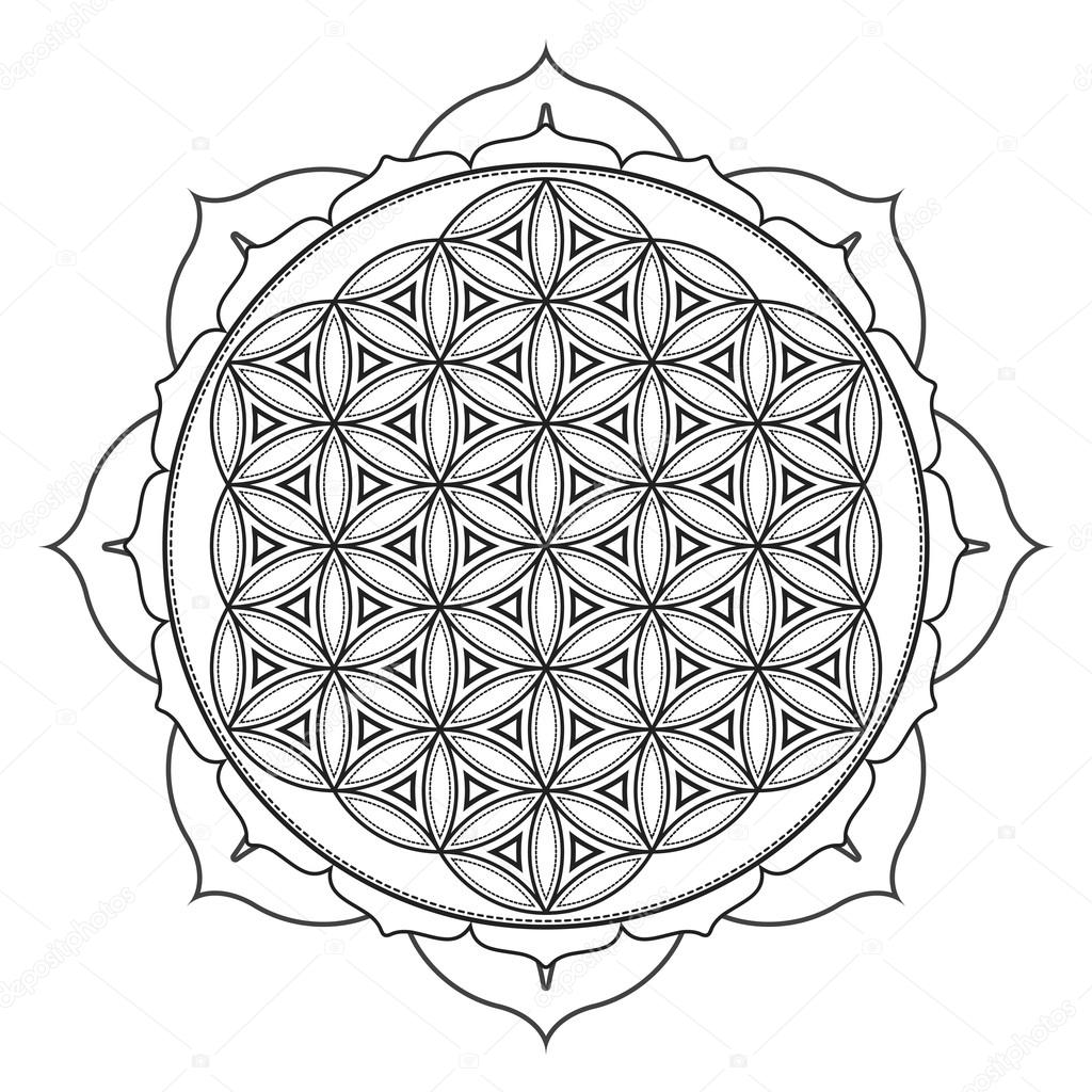 Vector Flor De La Vida Mandala Ilustración De Vector Mandala