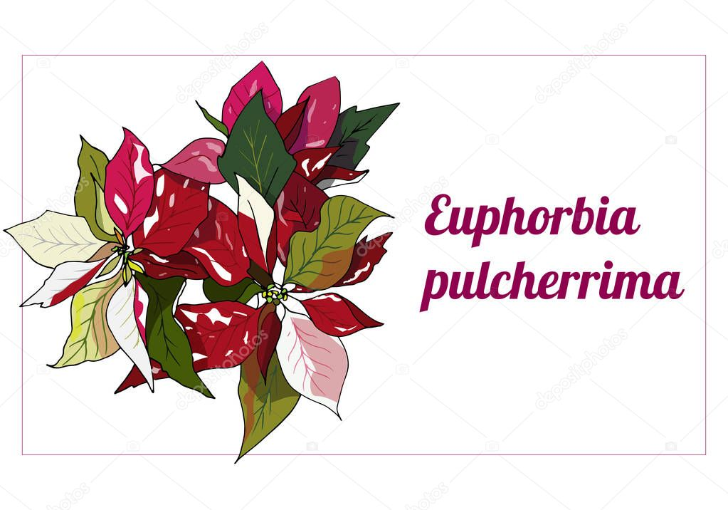 Template For Text Label With Red Poinsettia Flowers Vector Illustration For Signatures Business Cards And Design Christmas Flower Premium Vector In Adobe Illustrator Ai Ai Format Encapsulated Postscript Eps Eps Format