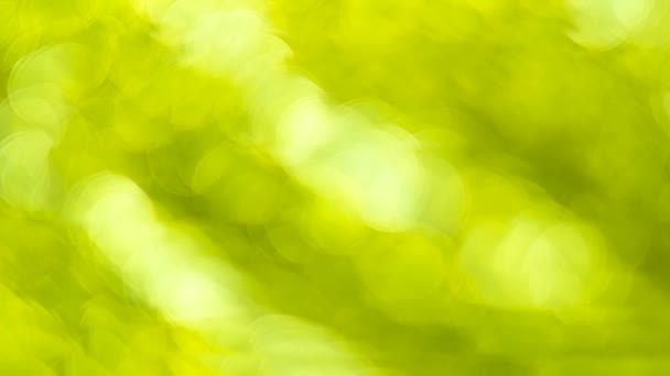 Green bokeh. Abstract background. Defocused lights. 4K High quality footage.