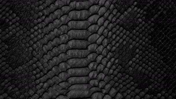 Snake skin background. Close up. 4k  high quality footage.
