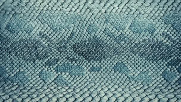 Snake skin background. Close up. 4k high quality footage.