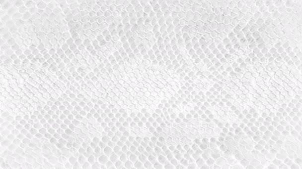 Kůže had pozadí bílá hadí kůže textura close-up