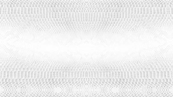 abstract parallax background texture of white snake skin python pattern stylish fashion animation