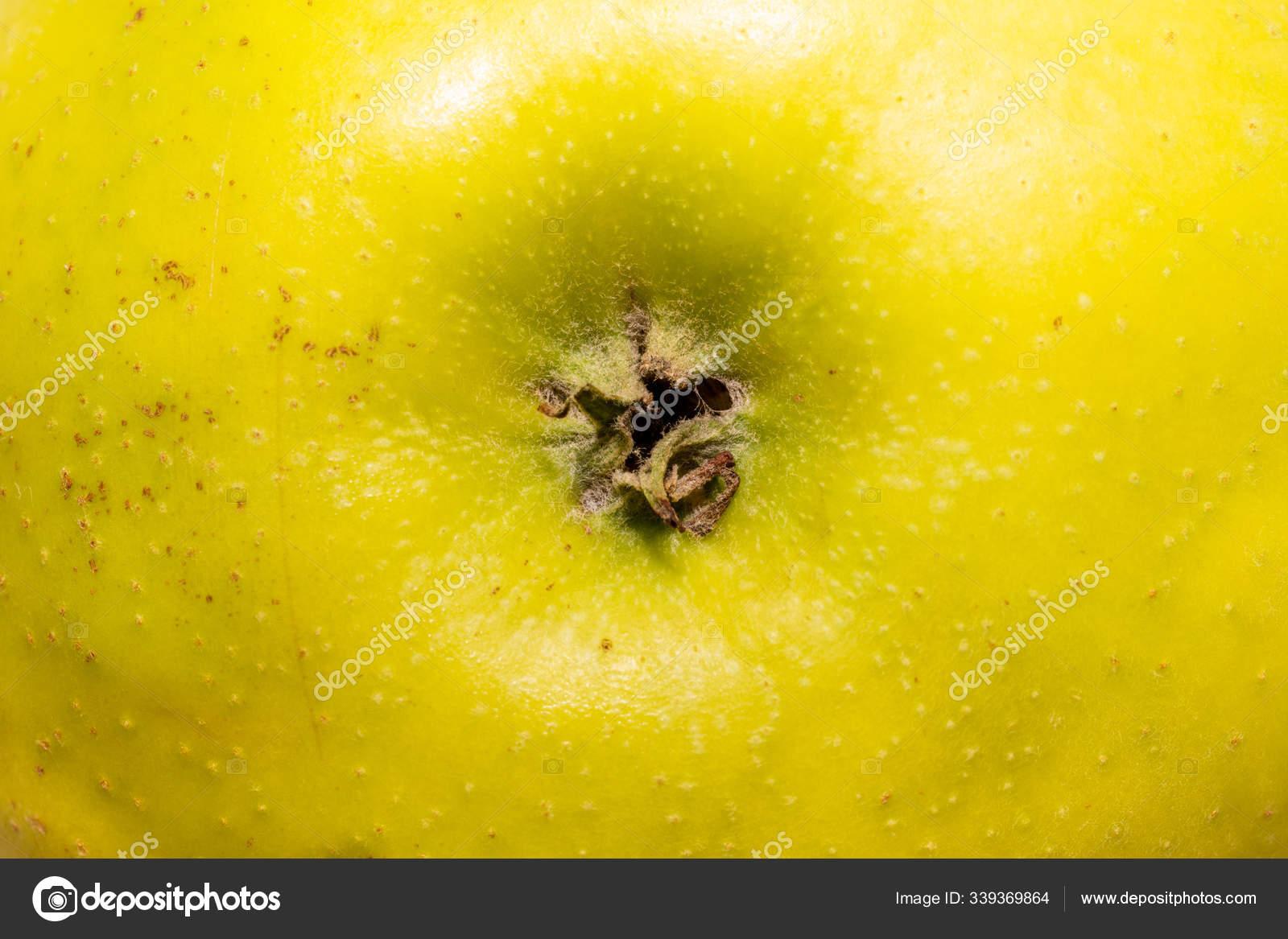 меховые шапки-ушанки плодоножка у яблока фото стены станут различаться