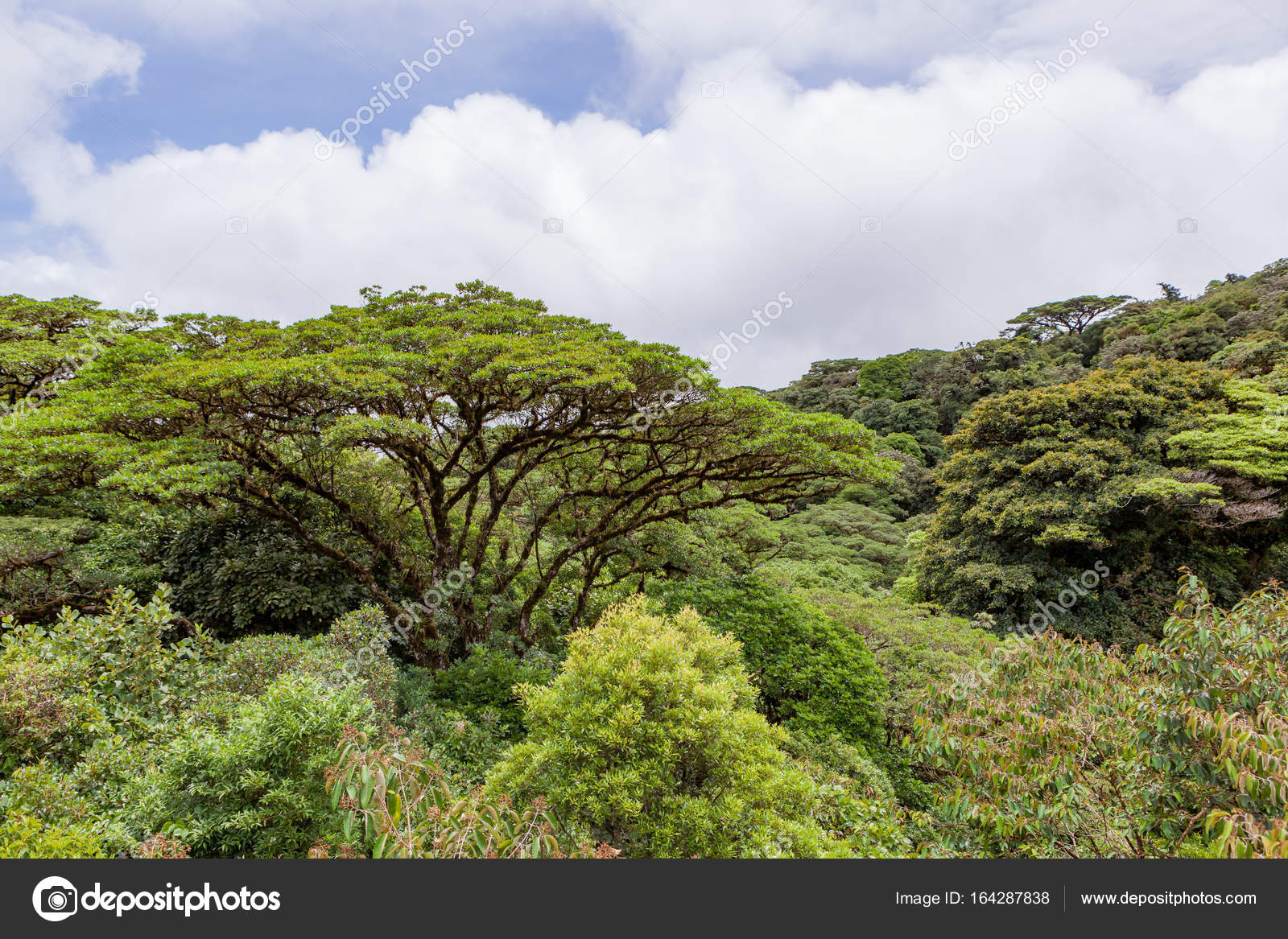 Lush rainforest canopy Monteverde Costa Rica u2014 Stock Photo #164287838 & Lush rainforest canopy Monteverde Costa Rica u2014 Stock Photo © Juhku ...