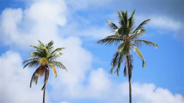 Two big palm trees in the blue sunny sky